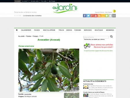Avocatier (Avocat), Persea americana - Au...