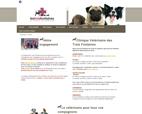 accueil-clinique-veterinaire-saint-andre