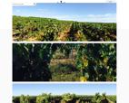 vins-des-costieres-de-n-icirc-mes