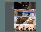 cabinet-veterinaire-du-dr-croain-veterinaire-a-comines-59560